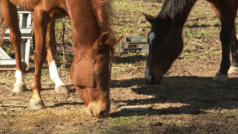 Local landowners say several horse saddles have been stolen within the last month.