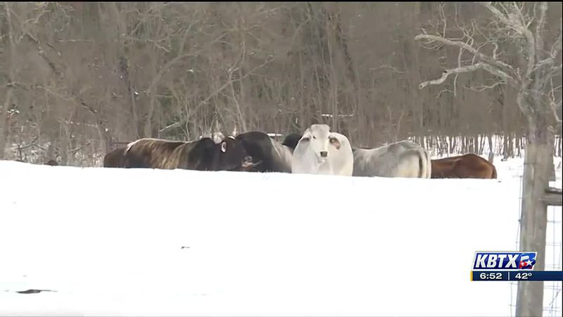 A look at how last month's winter storm is affecting local producers.