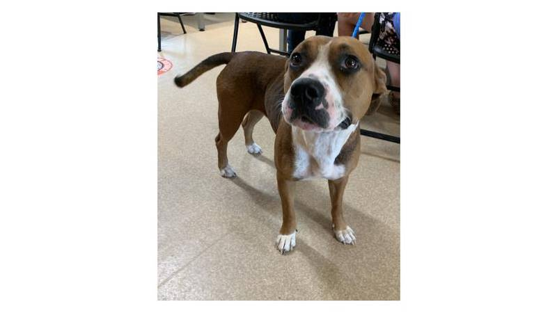 Sally is our Aggieland Humane Society Pet of the Week for July 2, 2021.