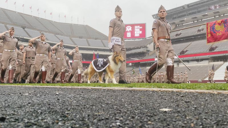 Texas A&M Reveille X has officially taken on the new role as the University's mascot.