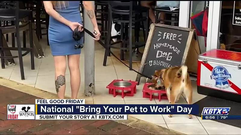 Today is National Take Your Dog to Work Day