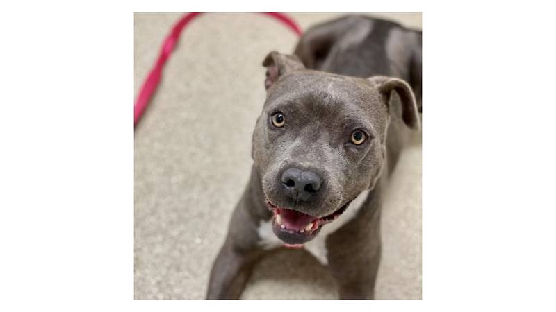 RiRi is our Aggieland Humane Society Pet of the Week for March 12, 2021.