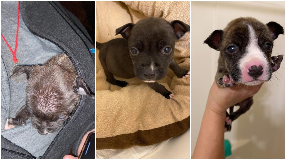 These puppies were found abandoned at the bottom of a trash dumpster during freezing...
