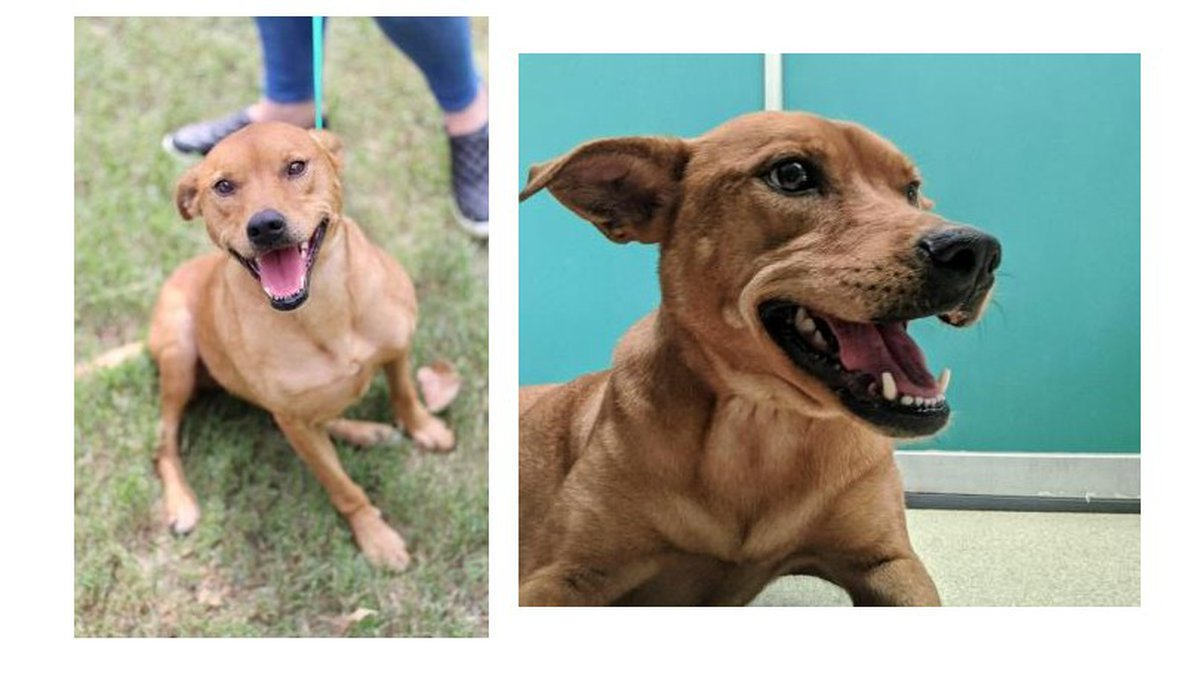 Baby is our Pet of the Week for Sept. 18, 2020. Aggieland Humane Society photos.