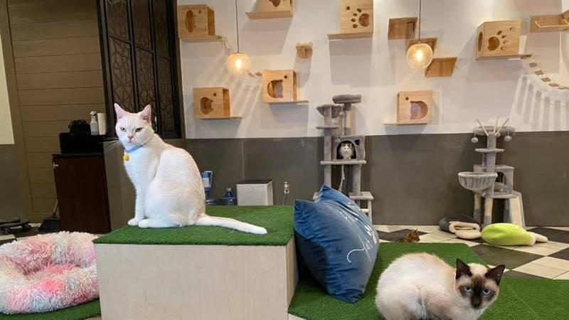 New cat café opens in Bryan