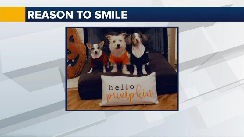 This week's Reason to Smile was sent to us from Elva Evans.  These dogs are smiling for a group...