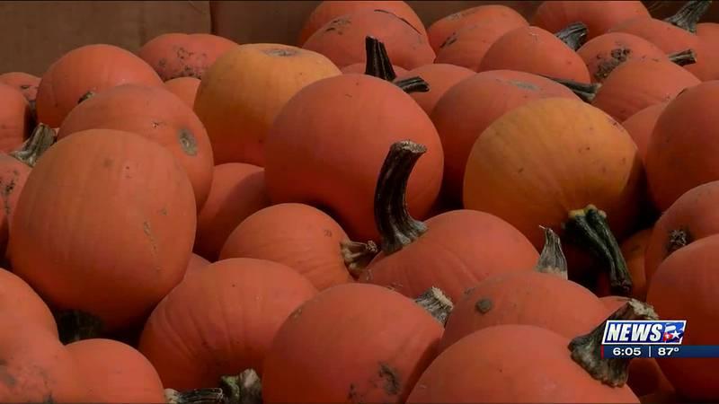 Pumpkin growers