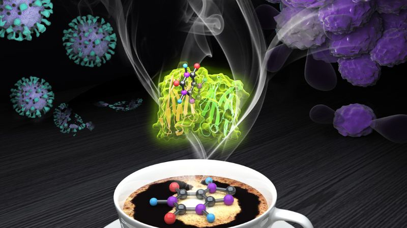 Drs. Yubin Zhou and Yun Huang's teams developed a caffeine-operated synthetic module (COSMO), a...