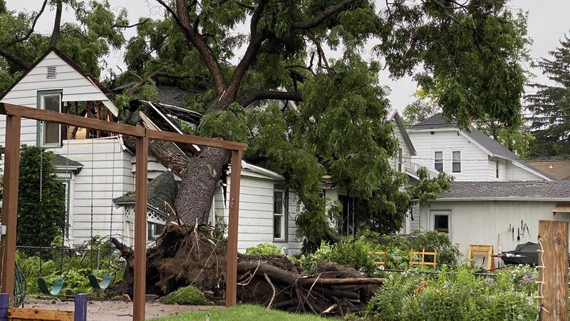 Damaging wind from this severe thunderstorm uprooted a tree, causing it to fall into a nearby...