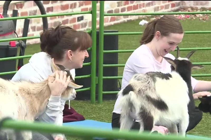 Goat Yoga Texas holds first public class in Aggieland Sunday at Century Square