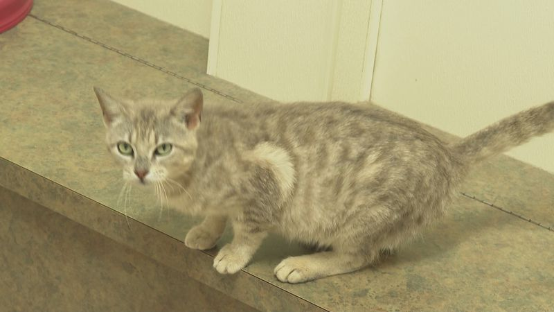 Our adorable pet of the week for May 7