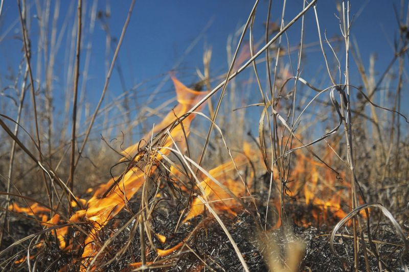 A prescribed burn in the Sam Houston National Forest is pushing smoke into communities in...