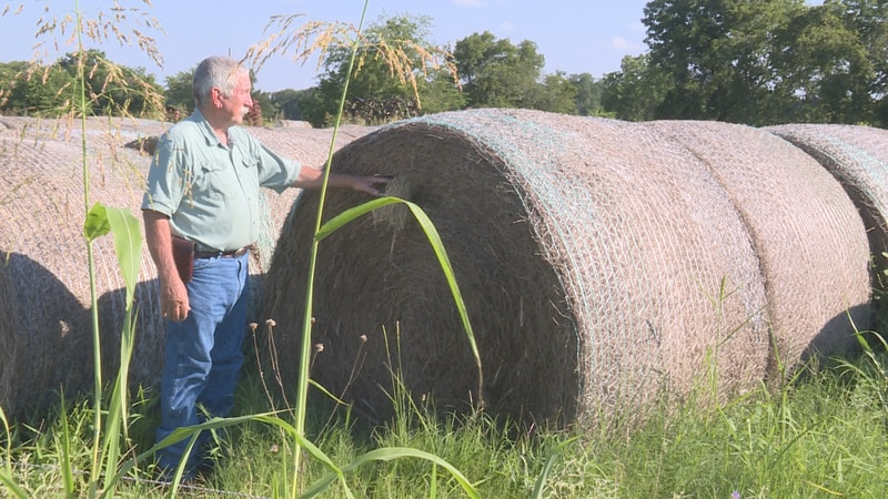 It's been a difficult first half of the year for hay farmers like Bruce Faust. By this time of...
