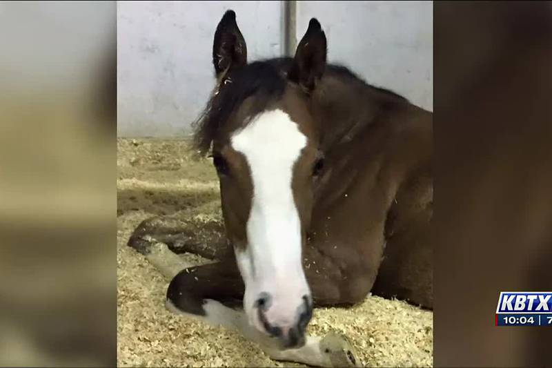 Texas A&M equine vet indicted last week was also named in two other lawsuits since 2017